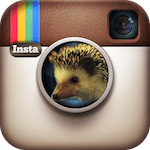 Thumbnail image for What My Hedgehog Taught Me About Instagram